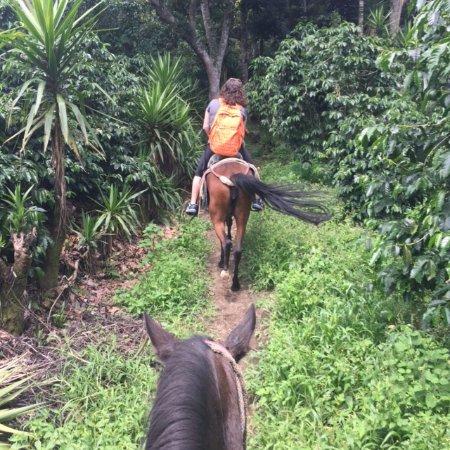 San Juan la Laguna, Guatemala: Riding through the coffee plantation