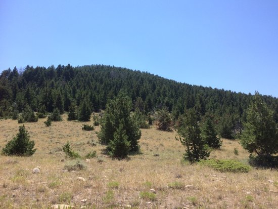Billings, Montana: photo6.jpg