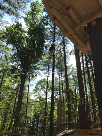 Canton, MA: Up in the trees!