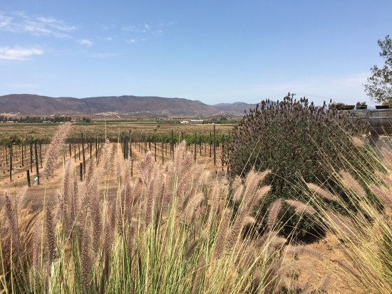 Valle de Guadalupe, Mexico: photo2.jpg