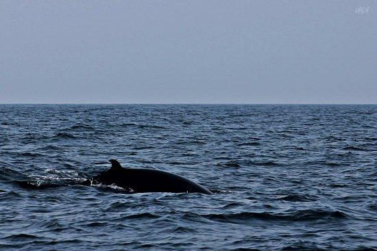 Lunenburg, كندا: A Fin Whale
