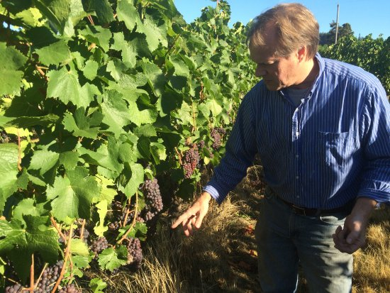 McMinnville, OR: Our winemaker, Rob Stuart at the Hirschy Vineyard