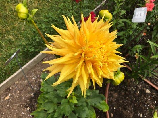 Thuya Gardens: photo2.jpg