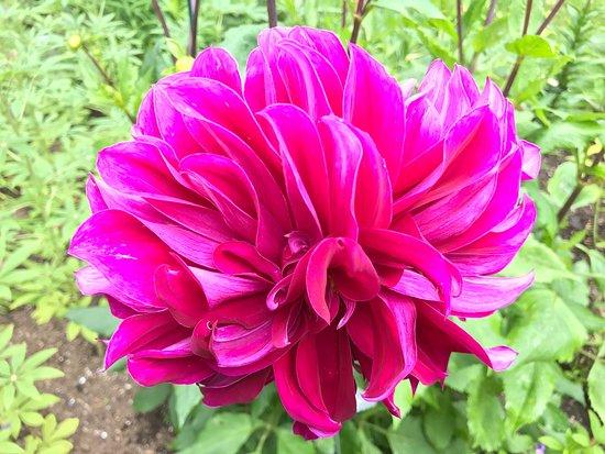 Thuya Gardens: photo3.jpg