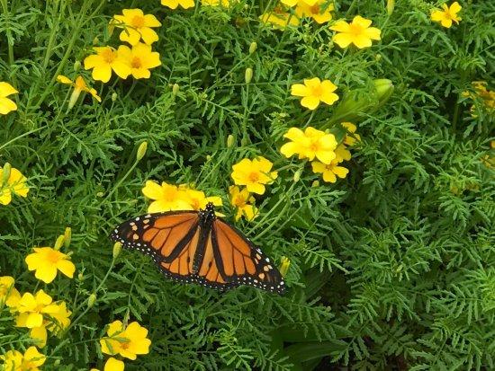 Thuya Gardens: photo4.jpg