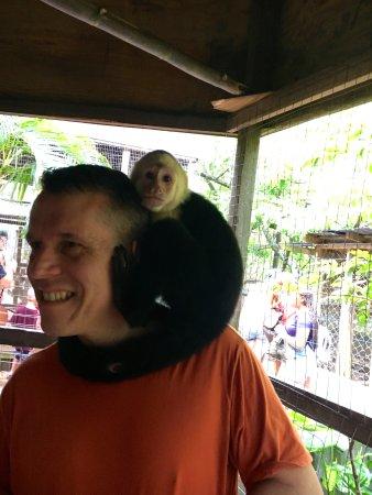 Coxen Hole, Honduras: Monkey visit!