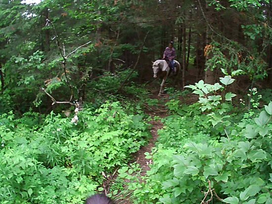 Alma, Canada: Dans la forêt