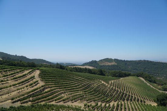 Cloverdale, CA: view from one of the wineries we went to