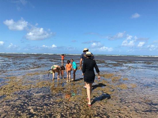 Itacimirim Beach: photo3.jpg