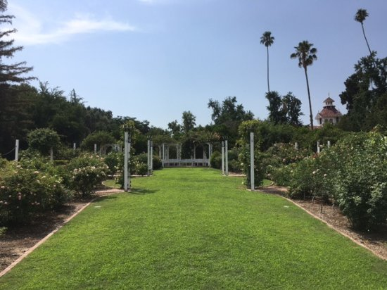 rose garden - Picture of Los Angeles County Arboretum & Botanic ...