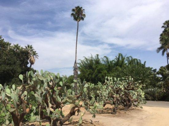 อาร์เคเดีย, แคลิฟอร์เนีย: cactus garden