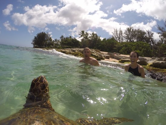Hauula, HI: Swimming with turtles