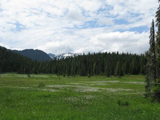 Mount Washington, Canada: Paradise Meadows