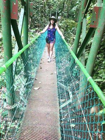 Эль-Кастильо, Коста-Рика: Hanging Bridges close to Birdsong