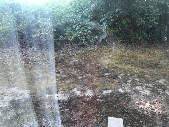 บีเวอร์ตัน, ออริกอน: The view from the very dirty window