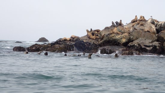 Avila Beach, CA: The sea lions were enjoying sunbathing on the rocks while their young frolicked below!