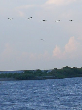 Crystal Beach, TX: IMG_20170708_191300_large.jpg