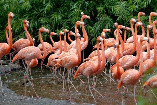 Alphen aan den Rijn, The Netherlands: Vogelpark Avifauna
