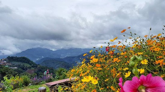 Flowers, clouds and mountains