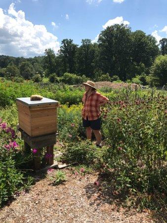 Cleveland, GA: Tour of the farm