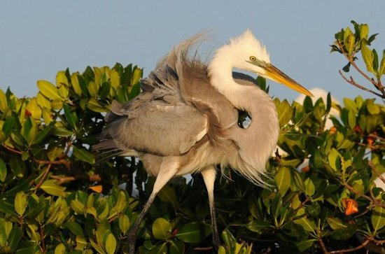 Everglades National Park Guided Walk With Birding, Photography