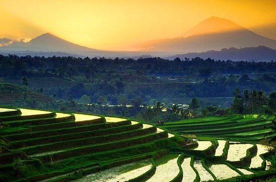 Tour privado: Bali Western Highlights