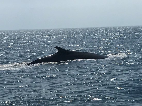 Granite State Whale Watch: photo0.jpg
