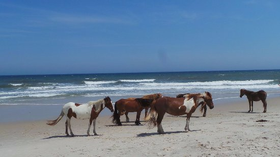 Snow Hill, MD: Just a typical day at the beach!