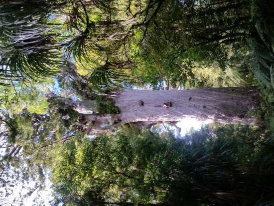 Opononi, Nueva Zelanda: 20170719_104641_large.jpg