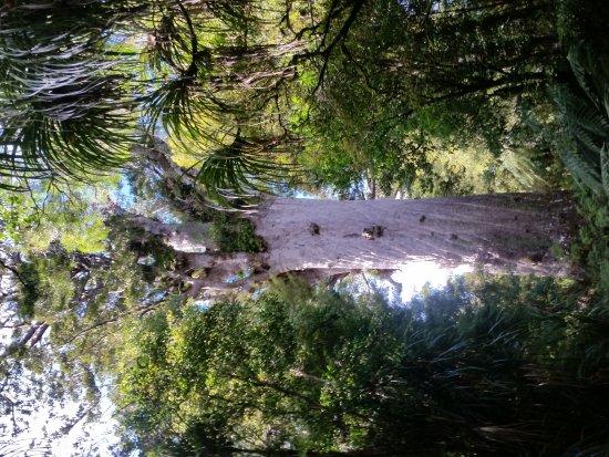 Opononi, New Zealand: 20170719_104641_large.jpg