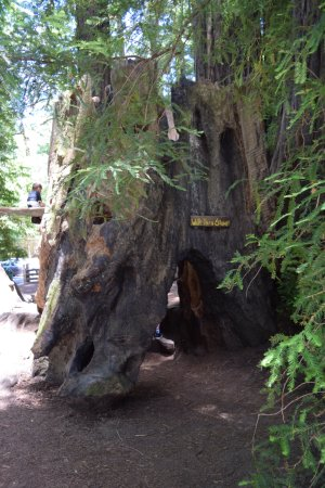 Myers Flat, Californie : Walk thru tree