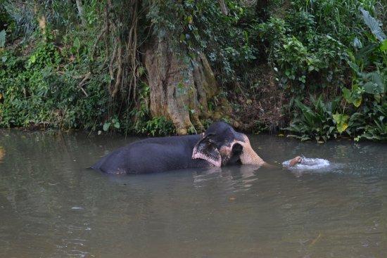 Kegalle, Sri Lanka: Raja spending time in the river!