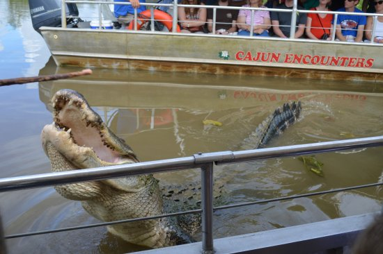 """Slidell, Louisiane : This giant was about 15 feet long, and seeing him is like """"winning the lottery"""", said the guide."""