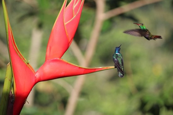 La Virgen, Costa Rica: hummingbirds at Dave & Dave's