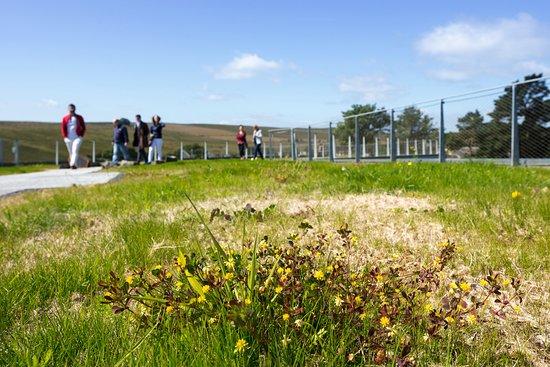 Hexham, UK: WIldflowers growing on the Green Roof