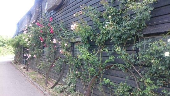 East Bergholt, UK: Great walks
