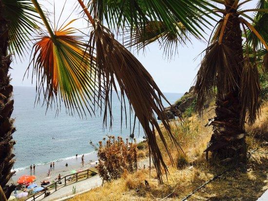 마로 사진