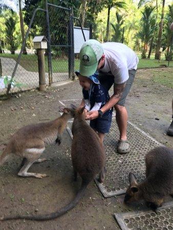 Diwan, Australia: photo0.jpg