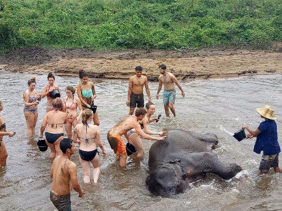Bath time - Foto di Maeklang Elephant Conservation ...