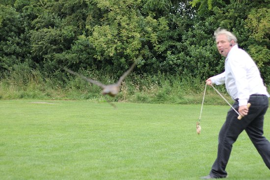 Huby, UK: York Bird of Prey centre 070717