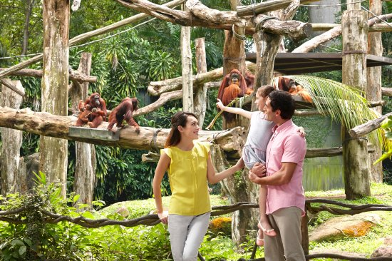 Singapur, Singapur: Hang out at the world's first free-ranging habitat for orangutans.