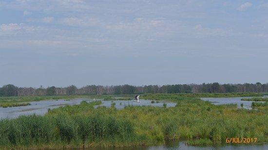 Провинция Оверэйсел, Нидерланды: Birds galore