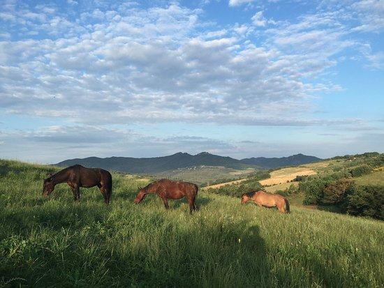 Pomarance, Włochy: I nostri cavalli al pascolo