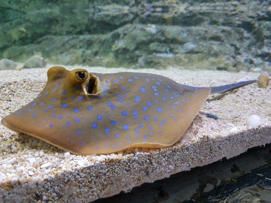 Chiang Mai Zoo Aquarium : 20170714_120920_large.jpg
