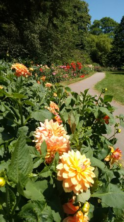 The Arboretum: a section of the 200 metre Dahlia border, too many curves to capture in one photo