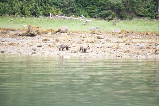 Tide Rip Grizzly Tours: Cubs