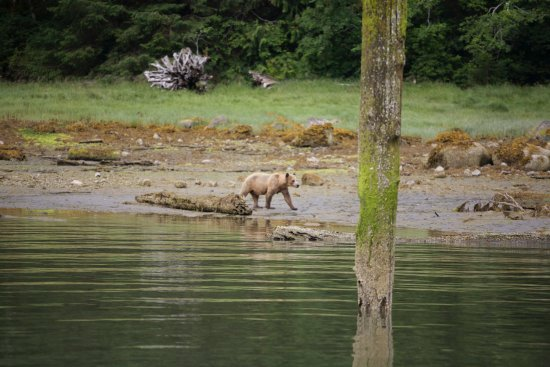Telegraph Cove, Kanada: 3 year old Grizzly