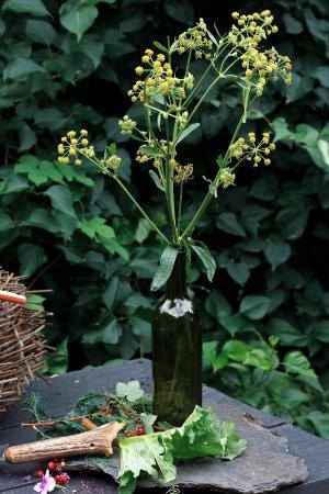 Chez Merie: La liveche du jardin