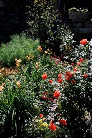 Chez Merie: Les roses du jardin