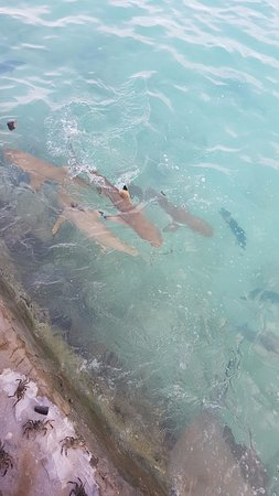 Vivanta by Taj Coral Reef Maldives Photo